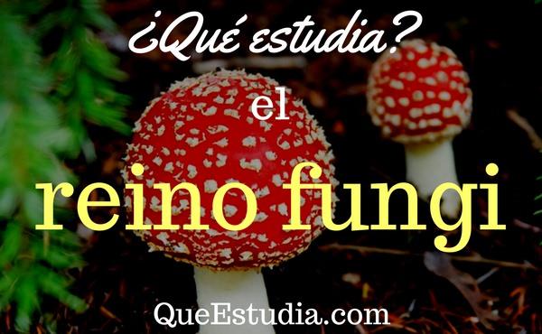 Terkini Como Se Llama El Profesional Que Estudia El Reino Fungi