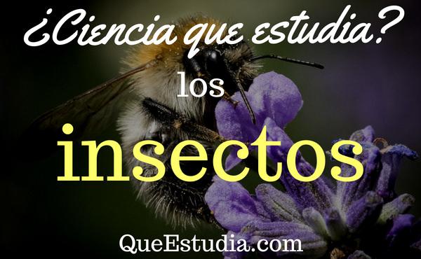 ciencia que estudia los insectos