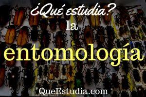 que estudia la entomología